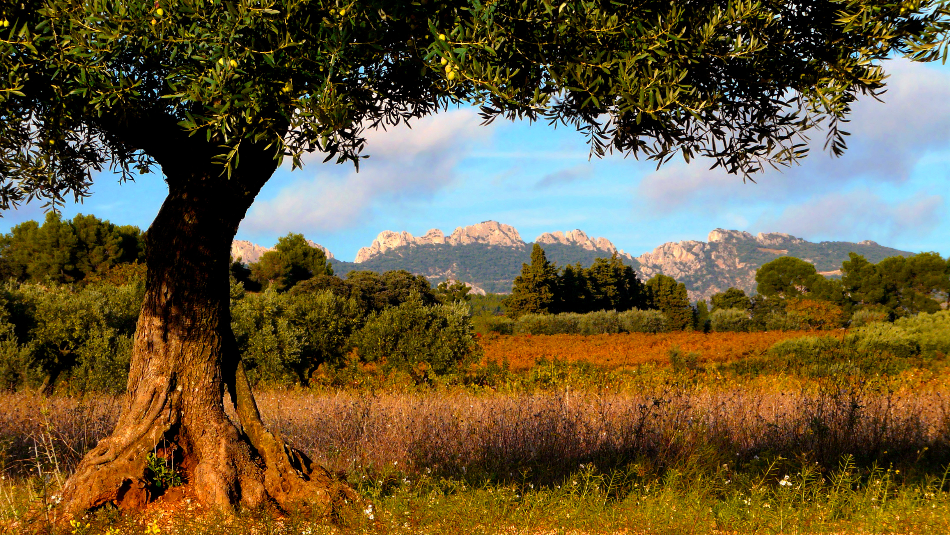 Taxes In France >> 16 days in Loire Valley, Bordeaux, Dordogne, Provence | France Just For You