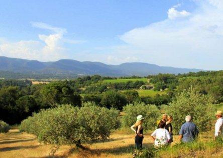 olive oil farm visit provence