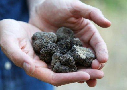 truffles france