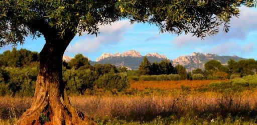 Dentelles in Provence